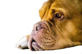 sad-dog-wonderbaba